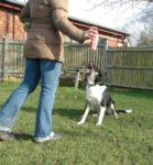 Dog Training Spray to Stop Barking and Unwanted behaviours