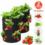 Tvird Strawberry Grow Bags